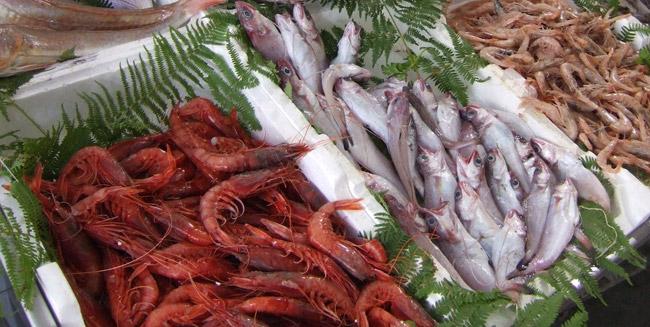 Anche il pesce ha le sue stagioni